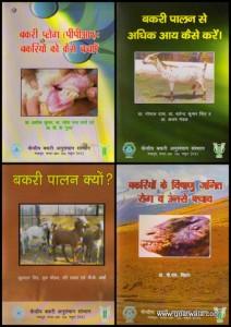Folder's Collage (4)