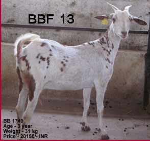 bf img8